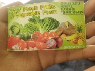 S.A.G FRESH FRUITS AND VEGETABLE FARM