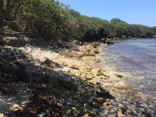 RESORT/VACATION PROPERTY FOR SALE IN RIO BUENO, TRELAWNY, JAMAICA