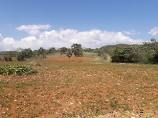 RESIDENTIAL LOT FOR SALE IN LACOVIA, ST. ELIZABETH, JAMAICA