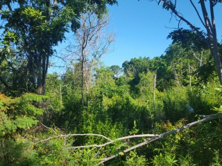 RESIDENTIAL LOT FOR SALE IN ALBION HEIGHTS, ST. THOMAS, JAMAICA