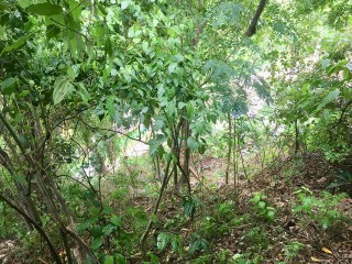 RESIDENTIAL LOT FOR SALE IN BELGRADE HEIGHTS EAST MEADE, KINGSTON / ST. ANDREW, JAMAICA