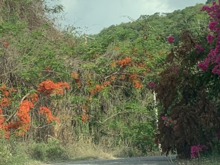 RESIDENTIAL LOT FOR SALE IN CARDIFF HALL ESTATES, ST. ANN, JAMAICA