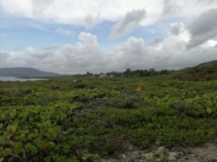 RESIDENTIAL LOT FOR SALE IN GALINA, ST. MARY, JAMAICA UNDER OFFER